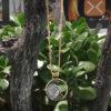 Hanger van eigen trouwring met vingerafdruk en haarlok BAX-17038